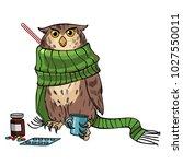vet clinic. disease of the owl. ... | Shutterstock .eps vector #1027550011