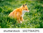 portrait of young little red... | Shutterstock . vector #1027564291