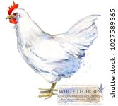 white leghorn hen. poultry... | Shutterstock . vector #1027589365