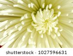 close up of petals on the... | Shutterstock . vector #1027596631