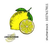 sketches of lemon. hand drawn... | Shutterstock .eps vector #1027617811