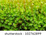 Fresh moss macro in green nature or in old stone or old wall - stock photo