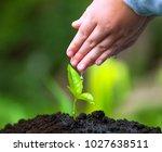 children hand watering young... | Shutterstock . vector #1027638511