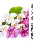 pink flowers with fresh green... | Shutterstock . vector #1027643539
