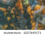 underwater wildlife abstract...   Shutterstock . vector #1027645171