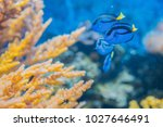 sugreonfish coral fish among...   Shutterstock . vector #1027646491
