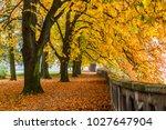 Beautiful Chestnut Alley In...