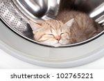 Stock photo sleeping kitten lying inside laundry washer 102765221