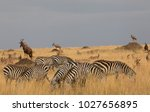this is a picture a herd of... | Shutterstock . vector #1027656895