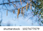Small photo of tree aglet against blue sky