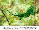 the common chameleon or... | Shutterstock . vector #1027692505