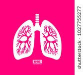 lungs anatomy vector poster... | Shutterstock .eps vector #1027755277