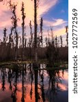 sun setting over louisiana swamp   Shutterstock . vector #1027772569