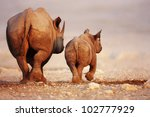 Black Rhinoceros Cow And Calf...
