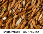 brown rice background | Shutterstock . vector #1027789255