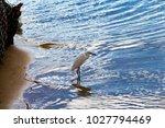 a beautiful graceful white...   Shutterstock . vector #1027794469