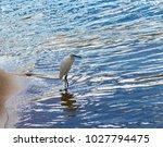 a beautiful graceful white...   Shutterstock . vector #1027794475