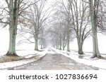 tree lined street or driveway...   Shutterstock . vector #1027836694
