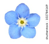 Forget Me Not Light Blue Flowe...