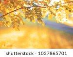 leafy park in a bright sunny... | Shutterstock . vector #1027865701
