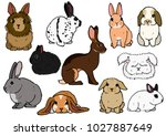 various breeds of rabbits | Shutterstock .eps vector #1027887649