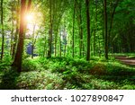 beautiful green forest | Shutterstock . vector #1027890847