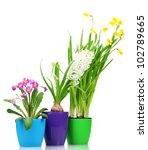beautiful spring flowers in... | Shutterstock . vector #102789665