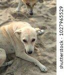 the resting beast | Shutterstock . vector #1027965529