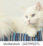 cat pet animal | Shutterstock . vector #1027995271