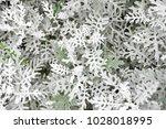leaf background image   Shutterstock . vector #1028018995