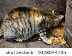 closeup of a street cat at... | Shutterstock . vector #1028044735