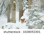 lynx hidden in snow forest....   Shutterstock . vector #1028052301