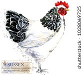 sussex hen. poultry farming.... | Shutterstock . vector #1028069725