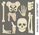 parts of human skeleton. skull  ...   Shutterstock .eps vector #1028074087