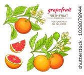 grapefruit vector set   Shutterstock .eps vector #1028078944