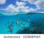 cloudy blue sky and a shoal of... | Shutterstock . vector #1028089465