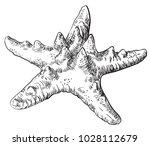 hand drawing starfish. vector... | Shutterstock .eps vector #1028112679