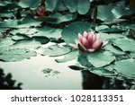 pink aquatic flower floating on ... | Shutterstock . vector #1028113351