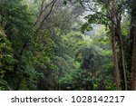 rainforest  far north... | Shutterstock . vector #1028142217