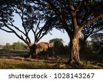 asia elephant in surin thailand | Shutterstock . vector #1028143267