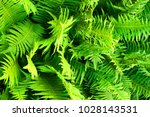 green fern plant texture as... | Shutterstock . vector #1028143531