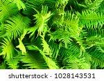 green fern plant texture as... | Shutterstock . vector #1028143531