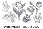 set of isolated medical plants  ... | Shutterstock .eps vector #1028159827