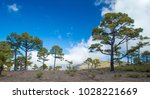 west of gran canaria  february... | Shutterstock . vector #1028221669