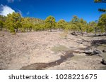 west of gran canaria  february... | Shutterstock . vector #1028221675