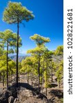 west of gran canaria  february... | Shutterstock . vector #1028221681
