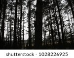 nature view winter trees little ... | Shutterstock . vector #1028226925
