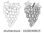 hand drawn grape. set of grapes ... | Shutterstock .eps vector #1028240815