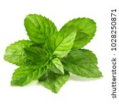 mint leaves isolated on white... | Shutterstock . vector #1028250871