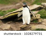 close up of southern rockhopper ... | Shutterstock . vector #1028279731